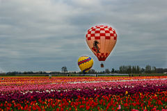 Vista Balloons over blooming field Royalty Free Stock Photos