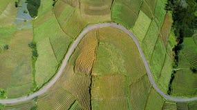 Vista bella del terreno coltivabile con la strada Immagine Stock Libera da Diritti