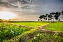 Vista bella Tailandia di tramonto di Paddy Green Immagini Stock