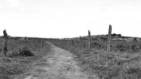 Vista in bianco e nero del paesaggio della campagna nordica della Spagna, colline coperte di erba al giorno soleggiato di estate video d archivio