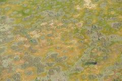 Vista Bird's-eye Immagini Stock Libere da Diritti