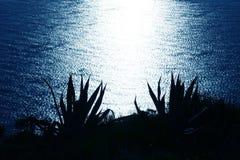 Vista blu del mare dalla pianta dell'agave dell'alta montagna Fotografia Stock