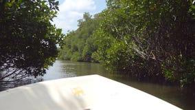 Vista bonita da curva de navio movente no rio entre a natureza selvagem com árvores e as plantas inundadas da floresta dos mangue filme
