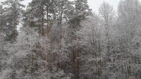 Vista bonita da floresta Fotografia de Stock