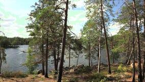 Vista bonita da floresta na paisagem bonita da natureza da costa do lago da Suécia video estoque