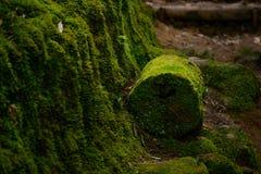 Vista bonita da floresta verde misteriosa Imagem de Stock