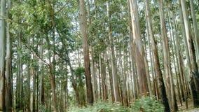 Vista bonita de árvores de coco imagem de stock royalty free