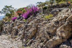 Vista bonita de flores roxas e vermelhas entre as rochas de um terreno árido imagem de stock