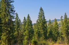 Vista bonita de montanhas carpatian. Imagem de Stock Royalty Free