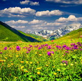 Vista bonita de prados alpinos nas montanhas fotos de stock