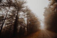 Vista bonita de uma estrada no meio da névoa, com as árvores nos lados e nas folhas na terra imagem de stock