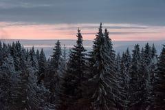 Vista bonita de uma floresta da montanha no inverno foto de stock royalty free