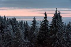 Vista bonita de uma floresta da montanha no inverno imagem de stock