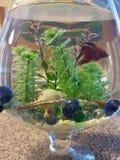 Vista bonita do aquário fotografia de stock royalty free
