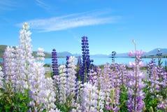 Vista bonita do lago Tekapo, Nova Zelândia Fotografia de Stock Royalty Free
