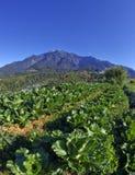 Vista bonita do Monte Kinabalu fotos de stock
