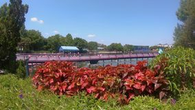 Vista bonita do roller coaster do Mako e do lago sete seas em Seaworld filme