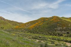 Vista bonita do superbloom na cordilheira de Walker Canyon perto do lago Elsinore fotografia de stock royalty free