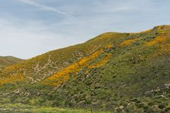 Vista bonita do superbloom na cordilheira de Walker Canyon perto do lago Elsinore imagens de stock royalty free