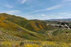 Vista bonita do superbloom na cordilheira de Walker Canyon perto do lago Elsinore foto de stock royalty free