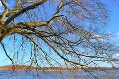 Vista bonita em uma árvore sulcado muito velha na frente de um céu azul fotos de stock