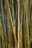 Vista bonita na floresta de bambu imagens de stock