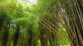 Vista bonita na floresta de bambu fotos de stock