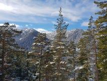 Vista bonita na snowboarding do esqui de Borovets imagens de stock