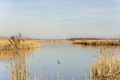 Vista bonita no Alblasserwaard, uma área no cervo do het Groene dos Países Baixos fotos de stock royalty free