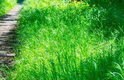 Vista bonita no quintal bonito no dia ensolarado, ajardinando no jardim, beleza da temporada de verão Imagens de Stock