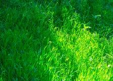 Vista bonita no quintal bonito no dia ensolarado, ajardinando no jardim, beleza da temporada de verão Foto de Stock