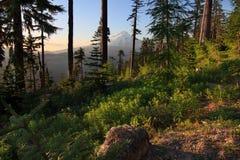 Vista bonito da capa da montagem em Oregon, EUA. imagens de stock