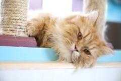 Vista bonito do gato foto de stock royalty free