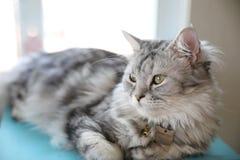 Vista bonito do gato imagens de stock royalty free
