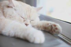 Vista bonito do gato imagem de stock