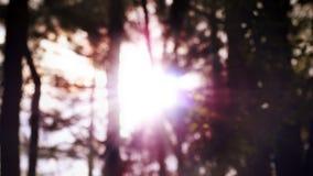 Vista borrosa del árbol con puesta del sol Imagen de archivo