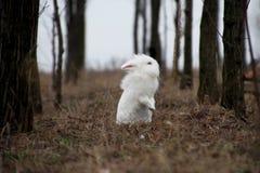 Vista branca do coelho da Páscoa Fotografia de Stock Royalty Free