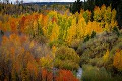 Vista brumosa magnífica de los muchos diversos colores de la hoja del otoño y una corriente de serpenteo en el área del depósito  foto de archivo libre de regalías