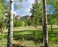 Vista cênico através das árvores de floresta em Colorado Imagem de Stock