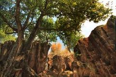 Vista cênico da caverna do azevinho em East Java tuban Indonésia imagens de stock
