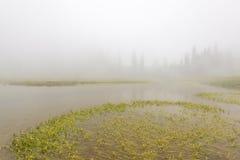 Vista cênico da floresta, do prado e do lago com névoa no dia no lago Tipzoo, mt mais chuvoso, Washington, EUA Foto de Stock Royalty Free