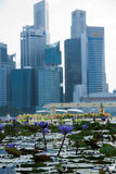 A vista cênico das flores gosta do lírio de água e do distrito financeiro, cidade de Singapura Fotografia de Stock