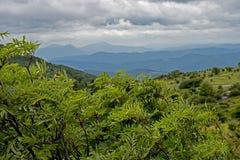 Vista cênico das hortaliças densas e de montanhas azuis em Grayson Highlands fotografia de stock royalty free