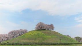 Vista cênico de árvores bonitas da flor de cerejeira em uma cume de prados gramíneos verdes sob o céu ensolarado azul Fotos de Stock