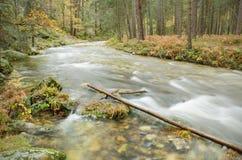 Vista cênico de um rio na floresta no parque natural de Boca del Asno em um dia chuvoso em Segovia, Espanha Foto de Stock Royalty Free