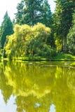 Vista cênico do gramado e das árvores com reflexão na lagoa no jardim botânico Imagens de Stock Royalty Free