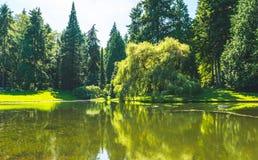 Vista cênico do gramado e das árvores com reflexão na lagoa no jardim botânico Fotografia de Stock Royalty Free