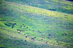 Vista cênico do prado da montanha Foto de Stock Royalty Free