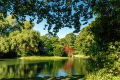 Vista cênico do rio calmo com fileira das árvores Foto de Stock