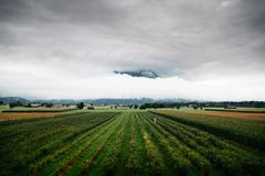 Vista cênico do vinhedo contra a montanha nevoenta Foto de Stock